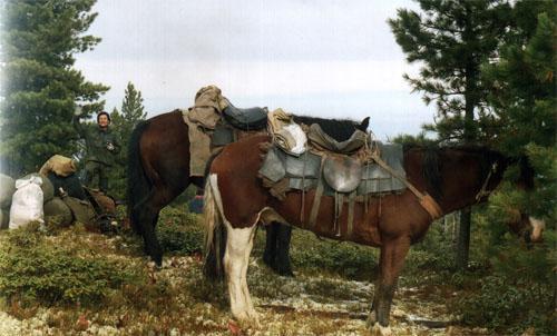 Самый лучший транспорт в тайге
