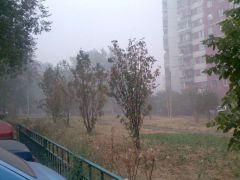 Дым и деревья