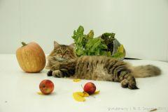 Кот, Айвенго Алдан.