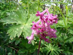Фигуристые цветки. Бутон пурпурный